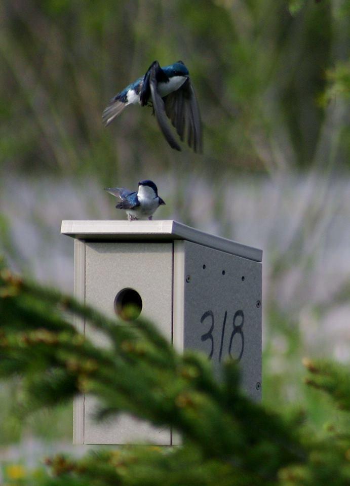 swallows mckinley gate 1